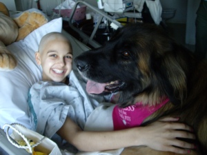 Rowan, the 122 lb therapy dog came to visit me during my third round of chemotherapy.  She insisted on being in the bed with me!  (Actually, ontop of me!)